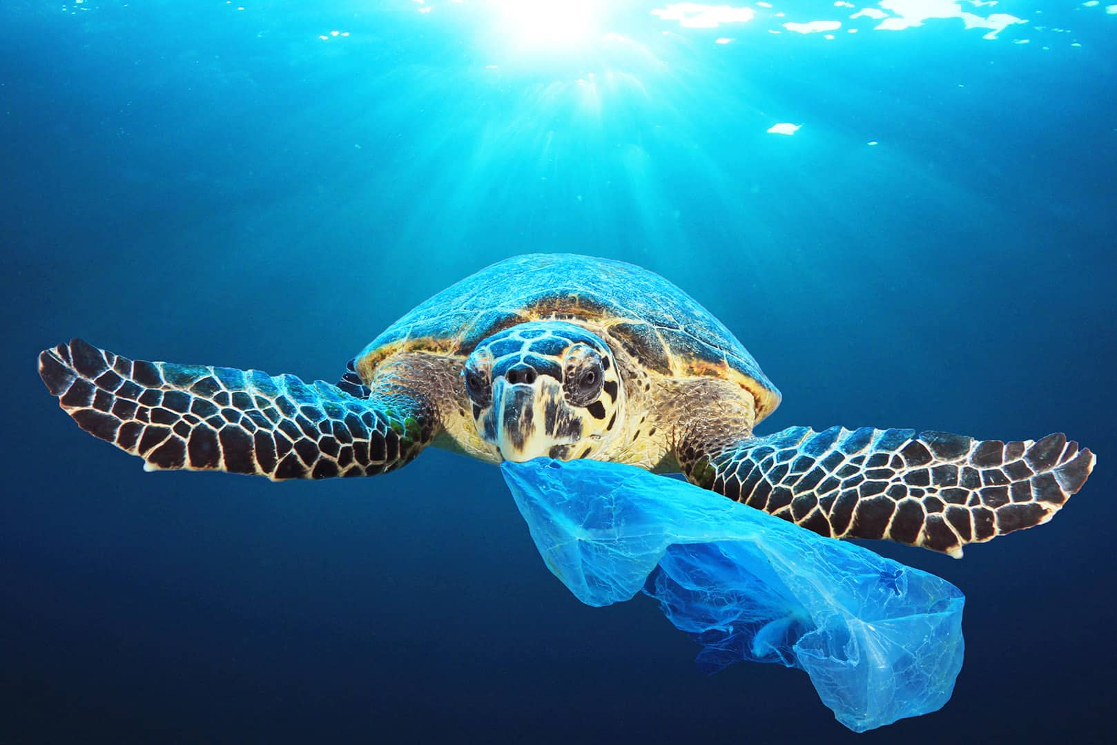 Plastic pollution in ocean environmental problem. Turtles can ea