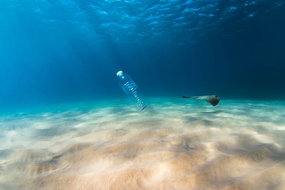 A single use plastic bottle floats in the clear blue ocean as a stingray glides past. Perfect for ocean conservation theme. (This bottle was collected and taken out of the ocean)